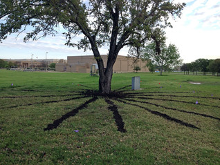 TREE RESTORATION & REPLANTING PROJECT CONTINUING TO IMPROVE IMPRESSIONS OF CAMPUS