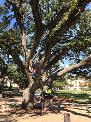SSC CELEBRATES TEXAS ARBOR DAY!