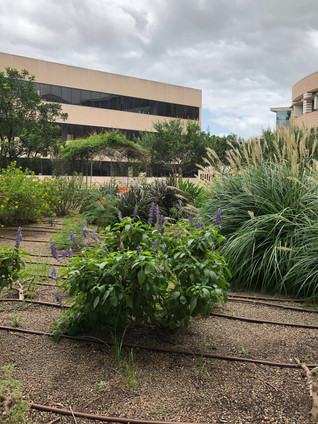 A LOOK AT THE TECH DECK AND THE CYNTHIA WOODS MITCHELL BUTTERFLY GARDENS