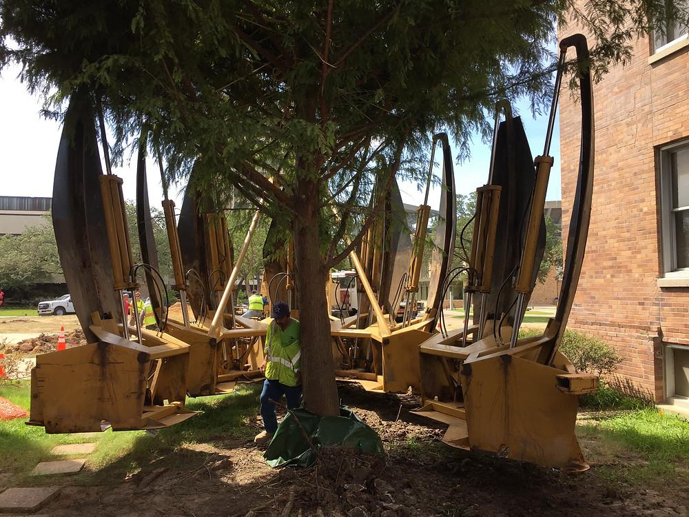 Tree Relocation at TAMU
