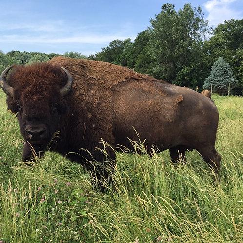 1/4 of bison