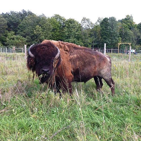 1/2 of Bison