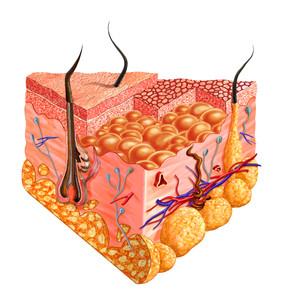 4 Ways the Skin Detoxifies Itself
