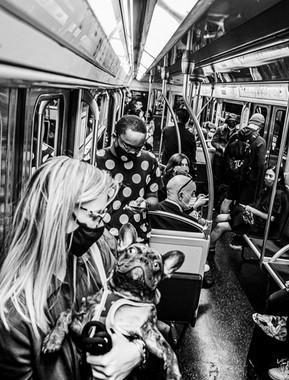 Instagram Dog and Girl Metro 4 10 2021.jpg