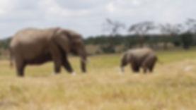 elephant-nairobi-park.jpg