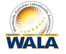 Upsidedown Labradoodles 03-15 WALA Logo.