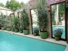 olivier buisson et lavandes.jpg