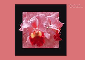 Flower Series 001 My Favorite Cattoleya