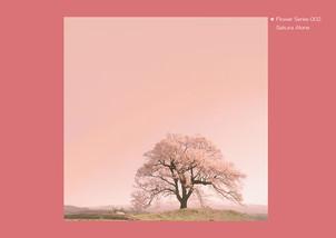 Flower Series 002 Sakura Alone