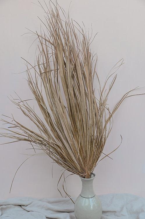 Dried Palm