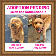 Gwen, House of Hope Animal Rescue