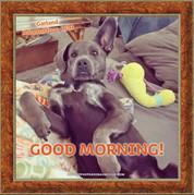 Good Morning from Garland