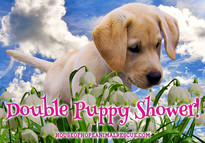 House of Hope Animal Rescue Double Puppy Shower