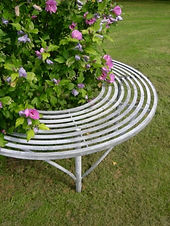 hibiscus tree seat.JPG