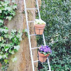 Plant Ladder