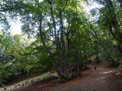 Forêt Vercors