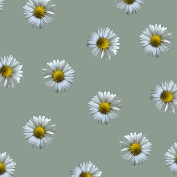girlhuman_daisies.png
