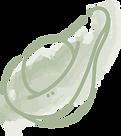 kitandbo_avocado_transparent.png