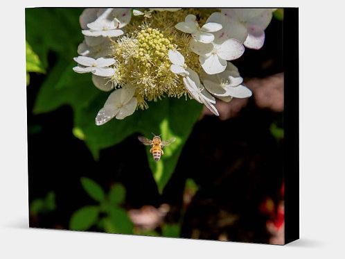 "Honey Bee - Canvas Wrap Black Edge 1.5"" Frame"