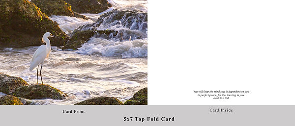 Ocean Bird Card.jpg