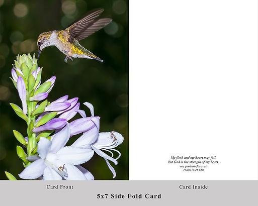 Hummingbird SF Card.jpg