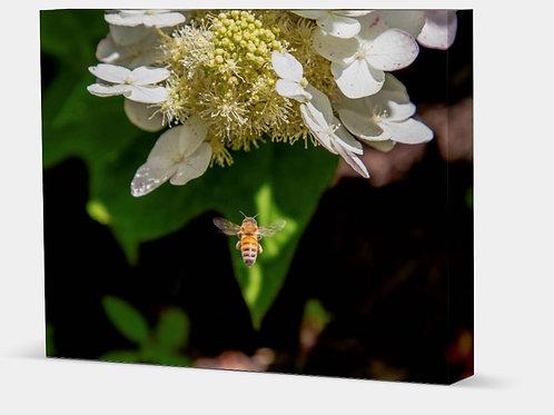 "Honey Bee - Canvas Wrap Full 1.5"" Frame"