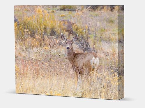 """Mule Deer - Canvas Wrap Full 1.5"""" Frame"""