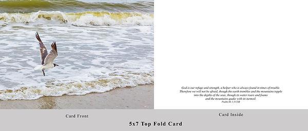 Seagull Card.jpg