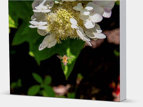 "Honey Bee - Canvas Wrap White Edge 1.5"" Frame"