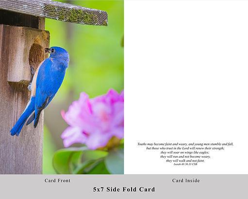 Bluebird Card.jpg