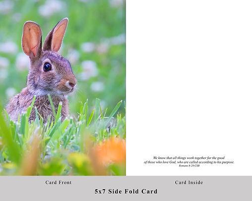 Bunny Card.jpg
