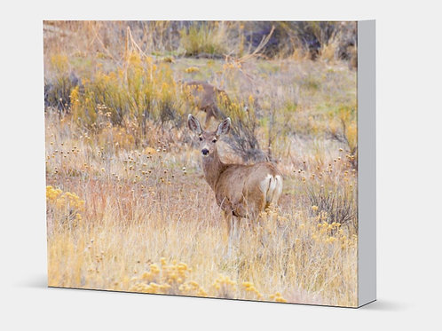 "Mule Deer - Canvas Wrap White Edge 1.5"" Frame"