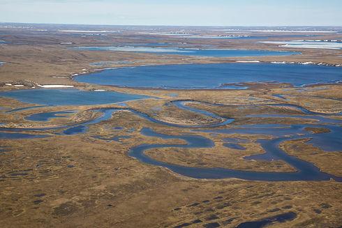 BLM_Summer_Roadtrip-_Wildlife_in_the_National_Petroleum_Reserve-Alaska_(19160621310).jpg