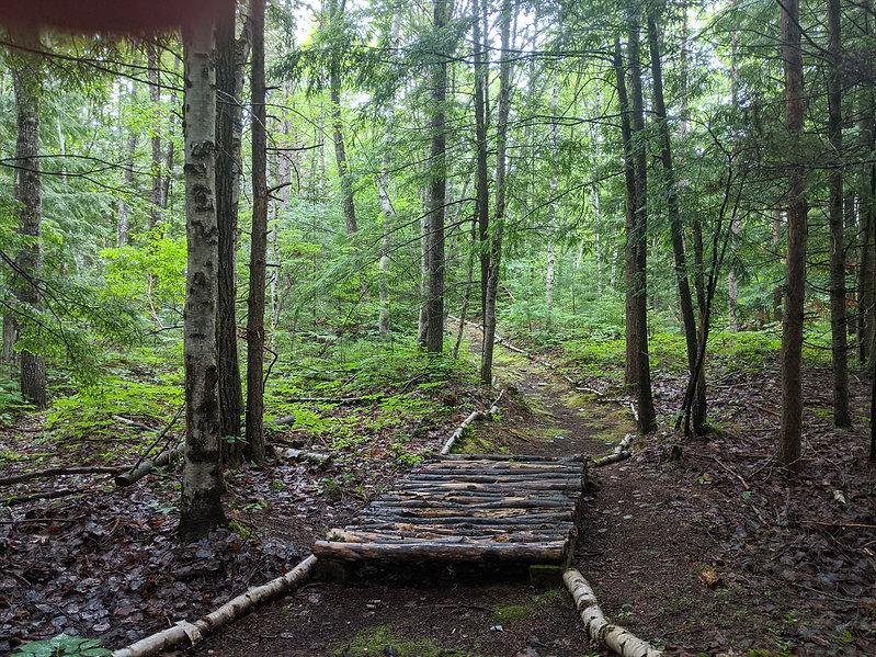 Forest Bathing Trail