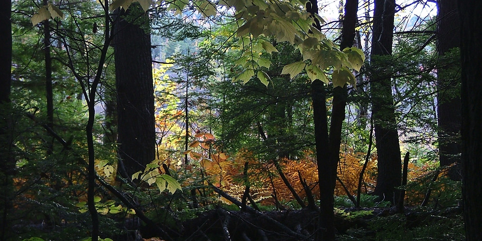 Forest Bathing/Forest Therapy Guided Walk (2)