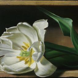 Boxed Tulip