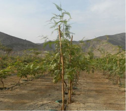 Tree Farm Menorca 3