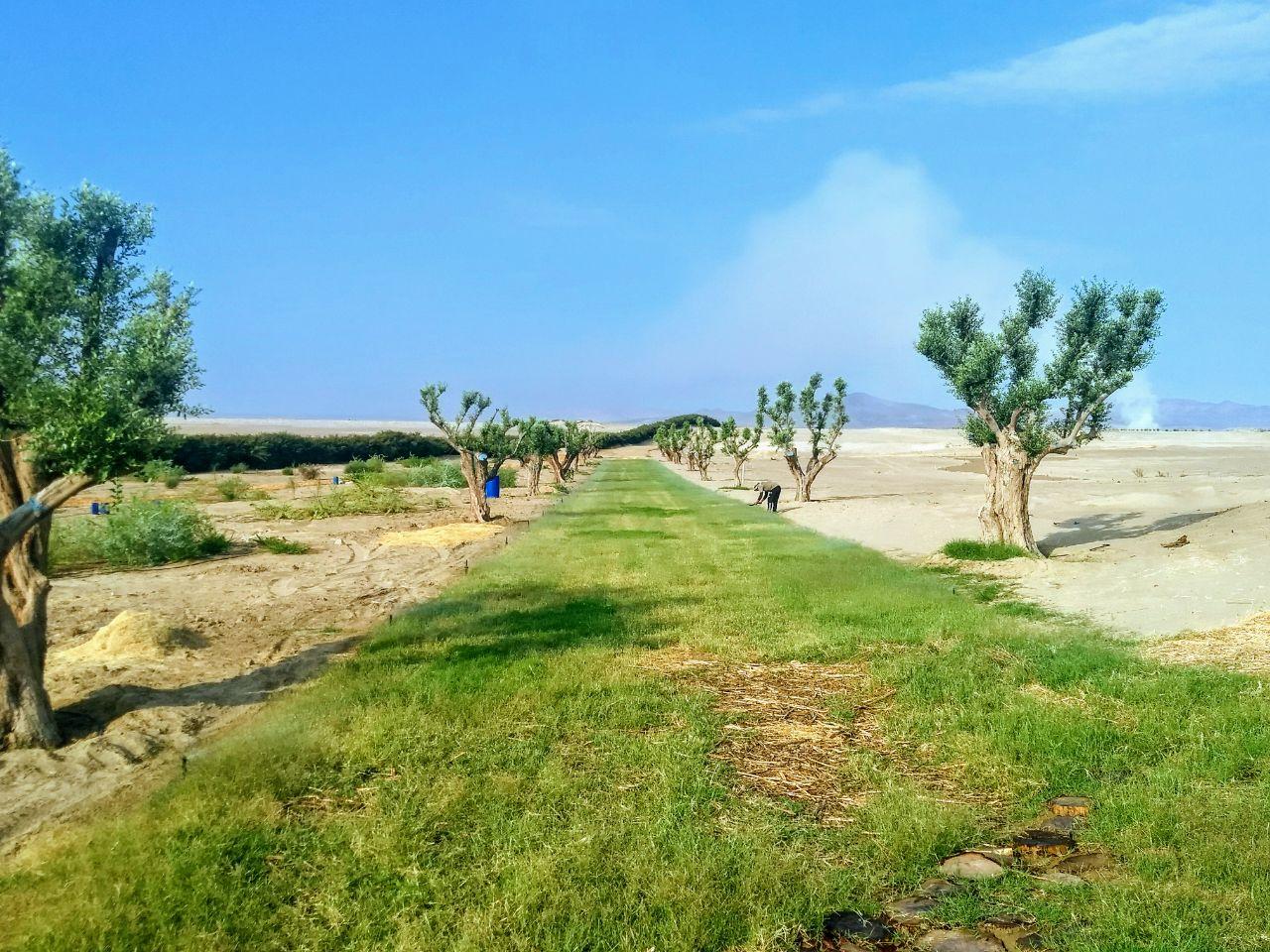 Vias Alamein 4