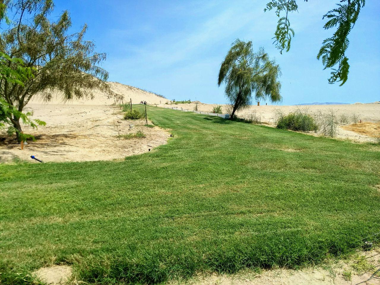 Alamein Caminos Grass 8