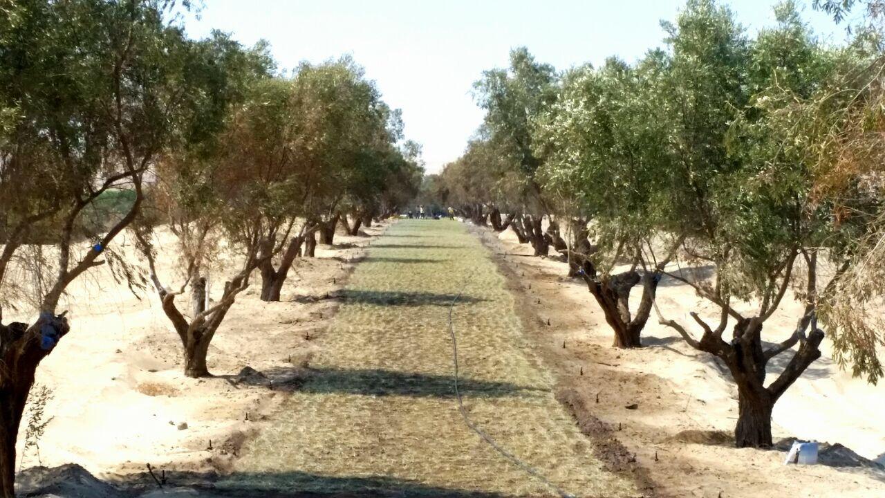 Foto 12 Camino sembrado