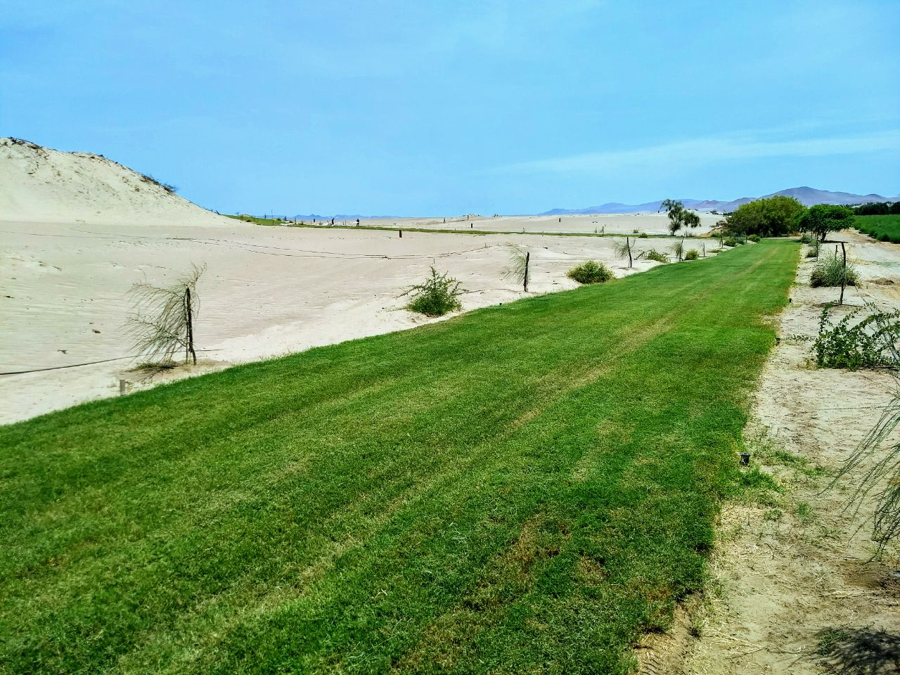 Alamein Caminos Grass 9