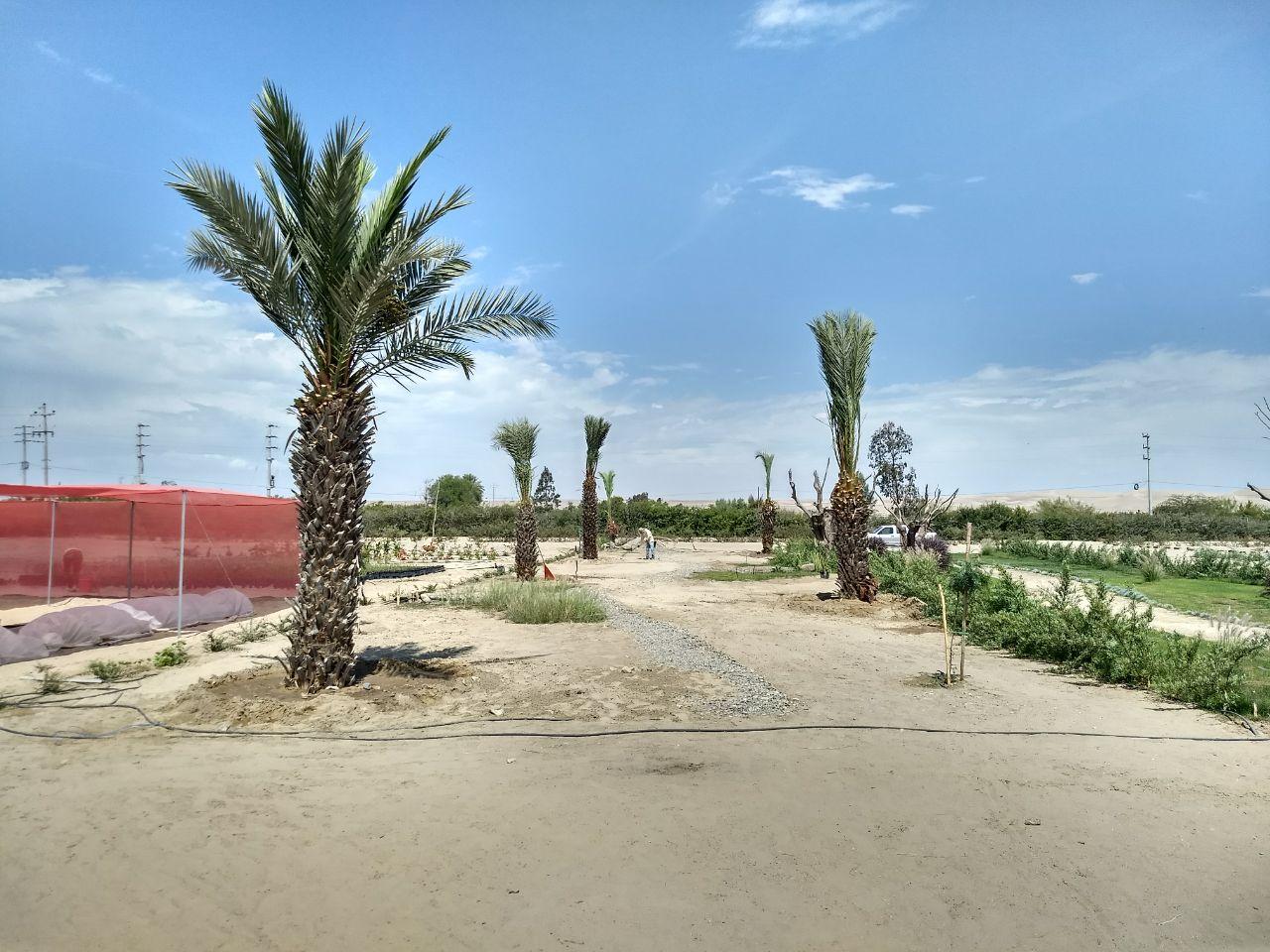 Alamein Areas Verdes Vivero