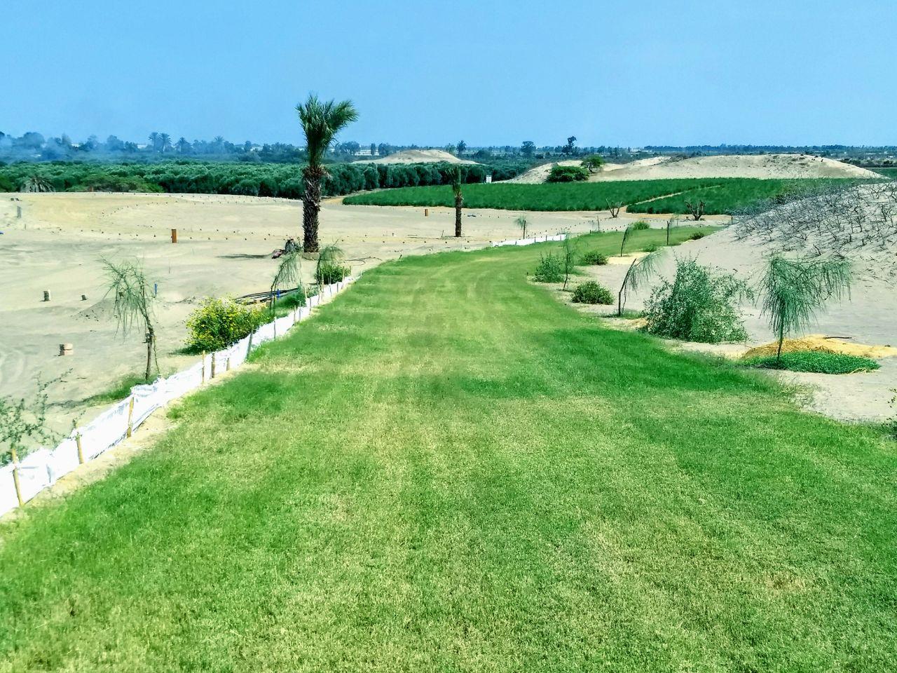 Camino Datileras