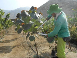 Tree Farm Menorca