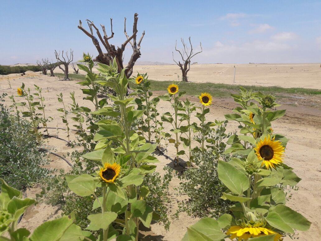 Restauración Ecologica Alamein