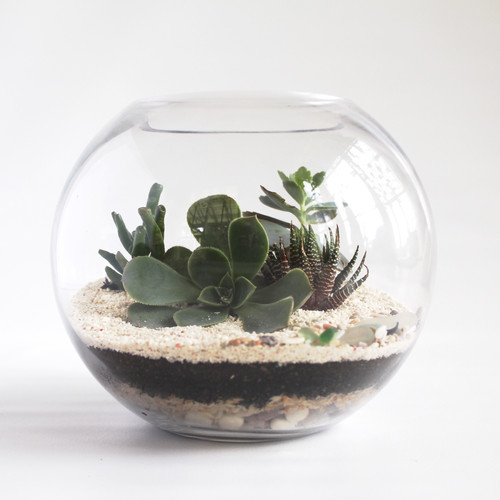 Terrariums Adelaide Delivery Gifts