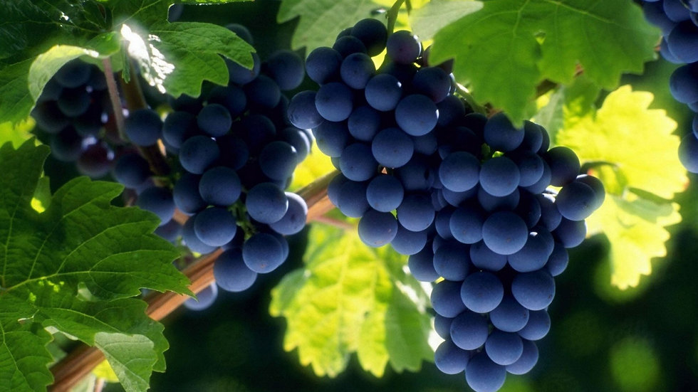 Delicious Grapes.jpg