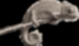 Chameleons_edited.png