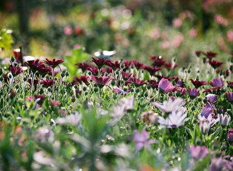 Cape Cod Garden Walks and Talks