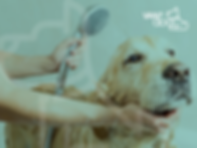 banner_bath_dog.png